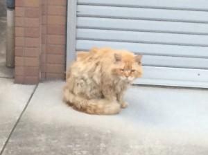 阿倍野のネコ