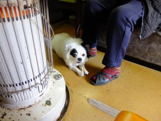 うず潮の店内犬のテリー