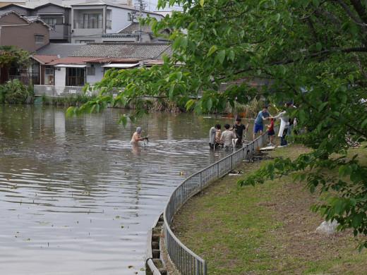 どっぷり、昭和町。レンコン掘り